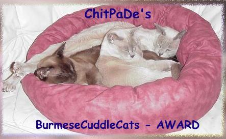 cuddlecataward.jpg